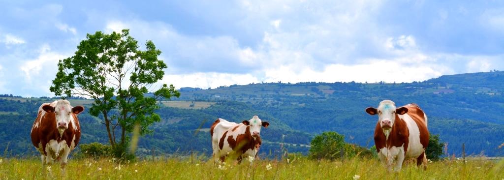 Ferme du GAEC de la clef des champs à Blesle en Auvergne