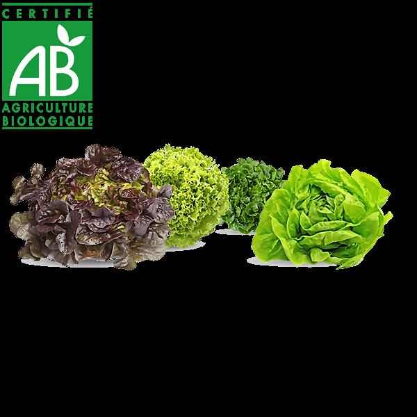 Salade d'Auvergne bio en vente sur le drive fermier