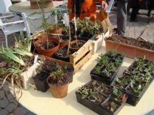 Préparez vos plantes pour le troc de Massiac