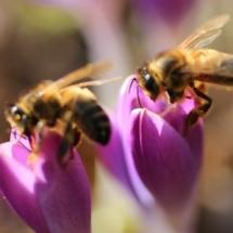 Abeilles et ruches en Auvergne