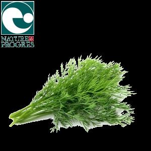 Aneth bio salade cultivée en Auvergne Nature et Progrès