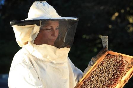 Productrice de miel de montagne en Auvergne