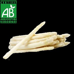 Asperges blanches produites en Auvergne en agriculture biologique