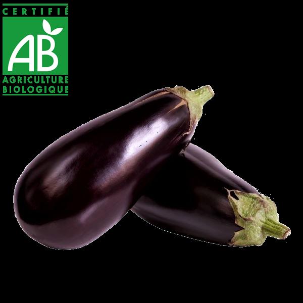aubergines bio produite en Auvergne en agriculture biologique