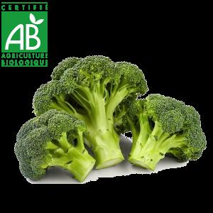 Choux Brocoli bio cultivé en Auvergne agriculture biologique