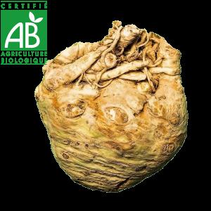 Céleri rave agriculture biologique d'Auvergne