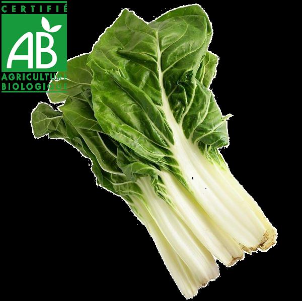 Blette ou Carde issue de l'agriculture biologique (AB) Auvergne