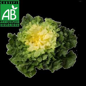 Salade d'Auvergne bio chicorée-scarole en vente sur le drive fermier