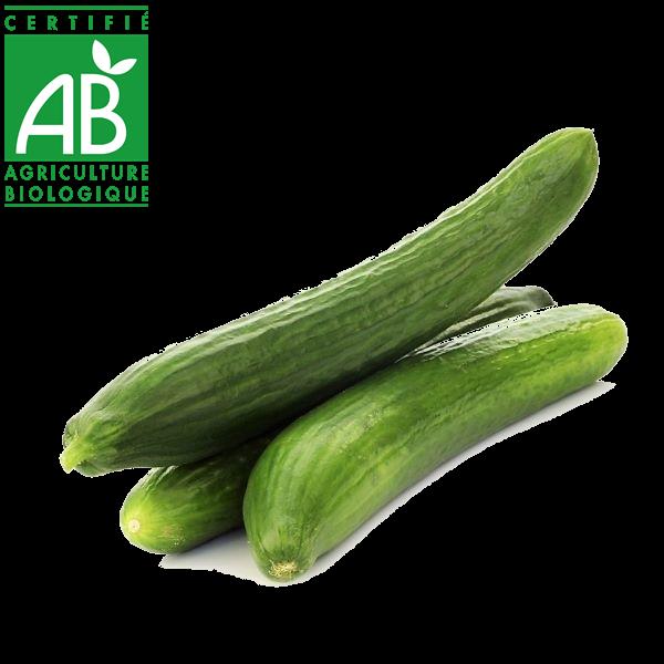 concombre AB élevé en Agriculture biologique Auvergne