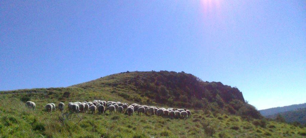 GAEC Lou Pastre : agneau bio en Auvergne