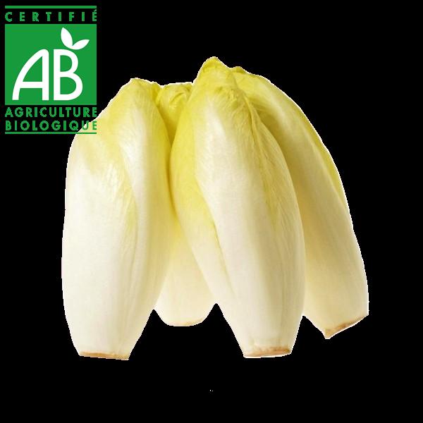 Endives AB élevées en Agriculture biologique en Auvergne