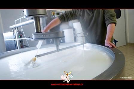 Fabrication fromage Saint-Nectaire fermier au lait cru