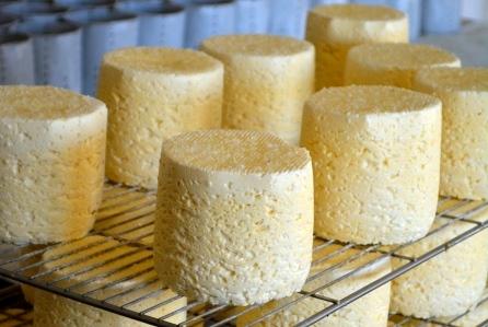 fromage fermier à pate molle