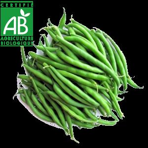 Haricots verts agriculture biologique maraîchers d'Auvergne