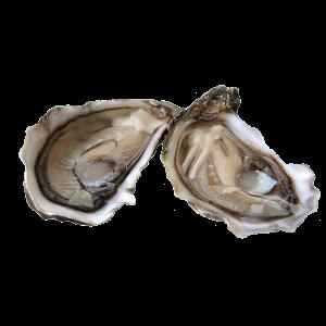 huîtres sauvages de l'étang de Thaux