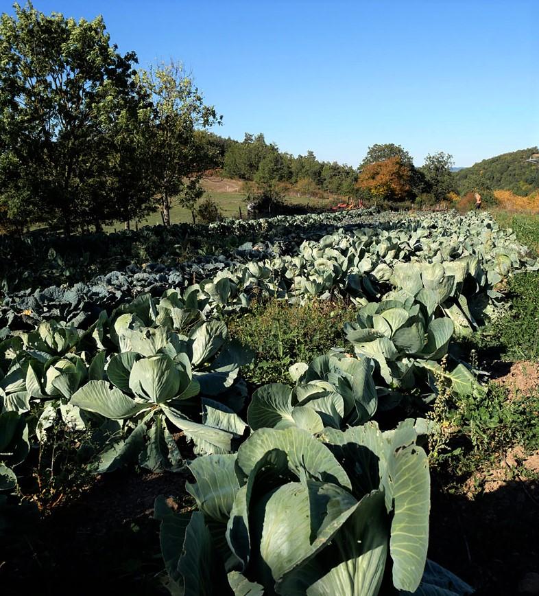 Maraîchage en agriculture biologique en Auvergne : Sandy Laurore