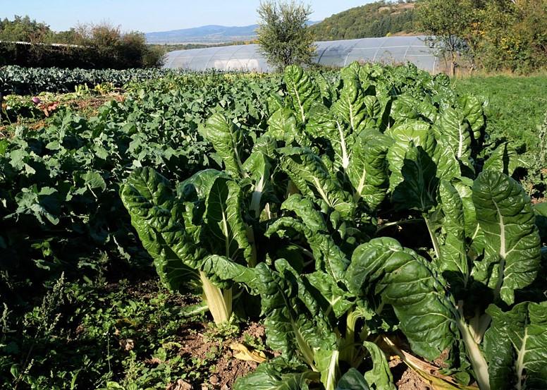 Maraîchage en agriculture biologique en Auvergne : drive fermier