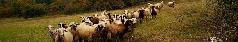 vente directe d'agneau en magasin de producteur