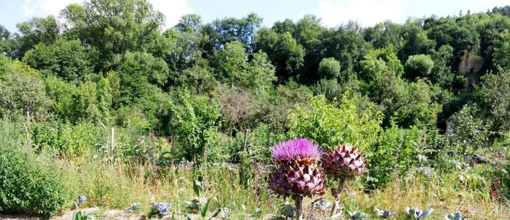 Camille Vasseau : Maraîcher à Massiac dans le Cantal en Auvergne