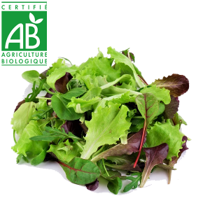Salade Mesclun bio cultivé en Auvergne