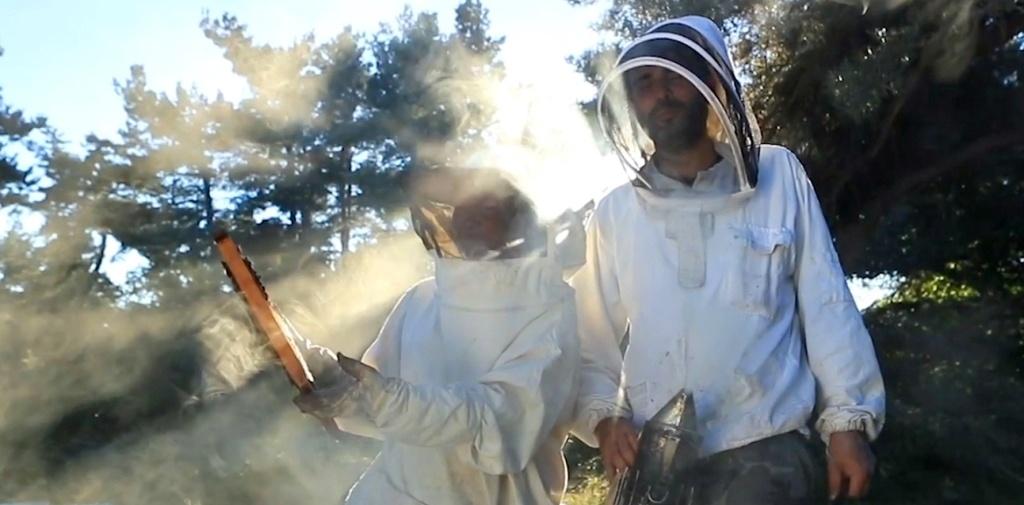 Miel de montagne - apiculteurs du Cantal en Auvergne
