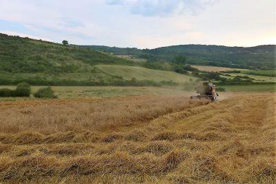 Ferme des Coqs'licots à Beaumont en Auvergne - blé et pain bio