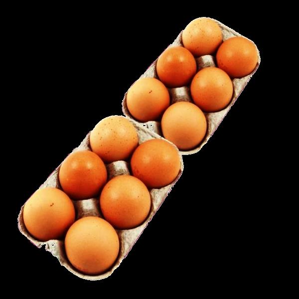 Œufs extra-frais fermiers bio d'Auvergne - vente directe - par 12