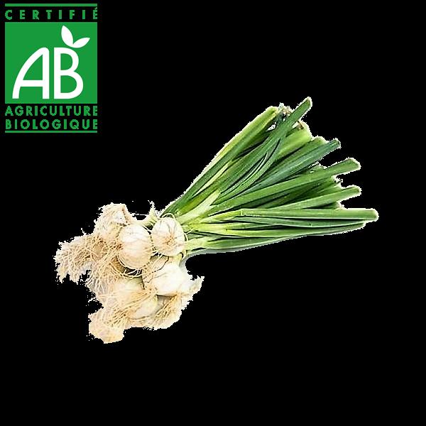 Bottes d'oignons blancs d'Auvergne bio en vente sur le drive fermier