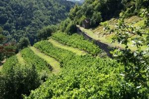 Culture en terrasse (Palhas) au village étape de Massiac