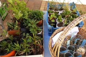 plantes pour le troc
