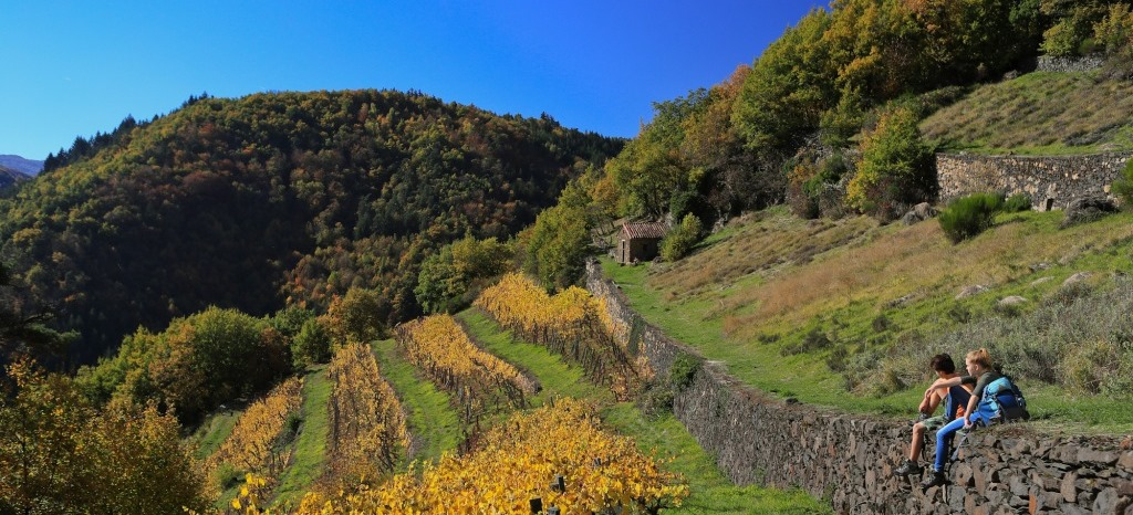 plantes aromatiques et médicinales sur les terrasses (Palhas) en Auvergne