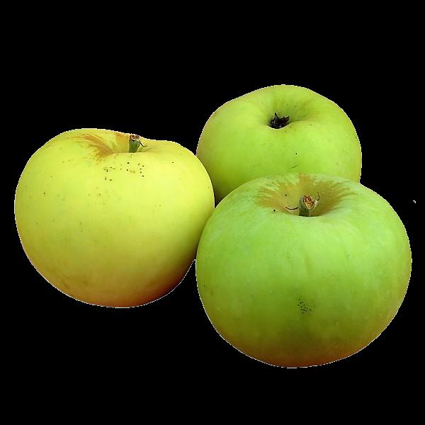 Pommes variété canada blanche récoltées en Auvergne