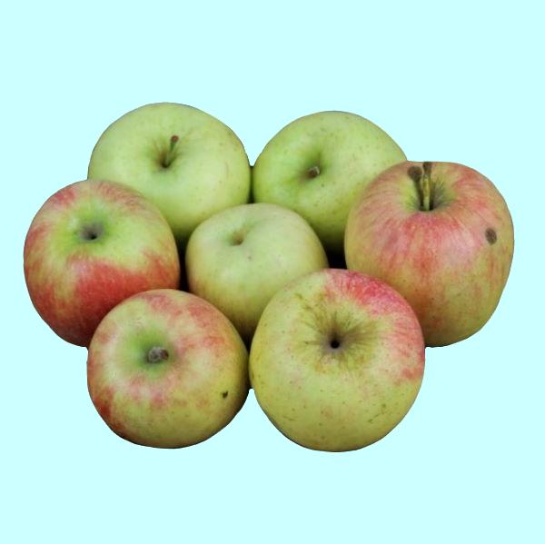 Pommes variété Delbard Estivale grise récoltées en Auvergne