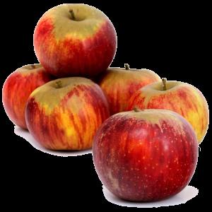 Pommes variété Reine des reinettes récoltées en Auvergne vente directe
