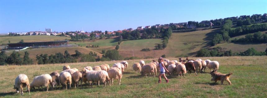 fromages fermiers de chèvre et brebis bio