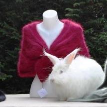 L'angora des volcans : production de laine angora de lapin