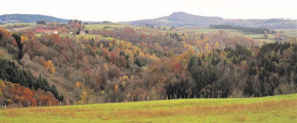 Producteurs de volailles fermières - Cantal Auvergne
