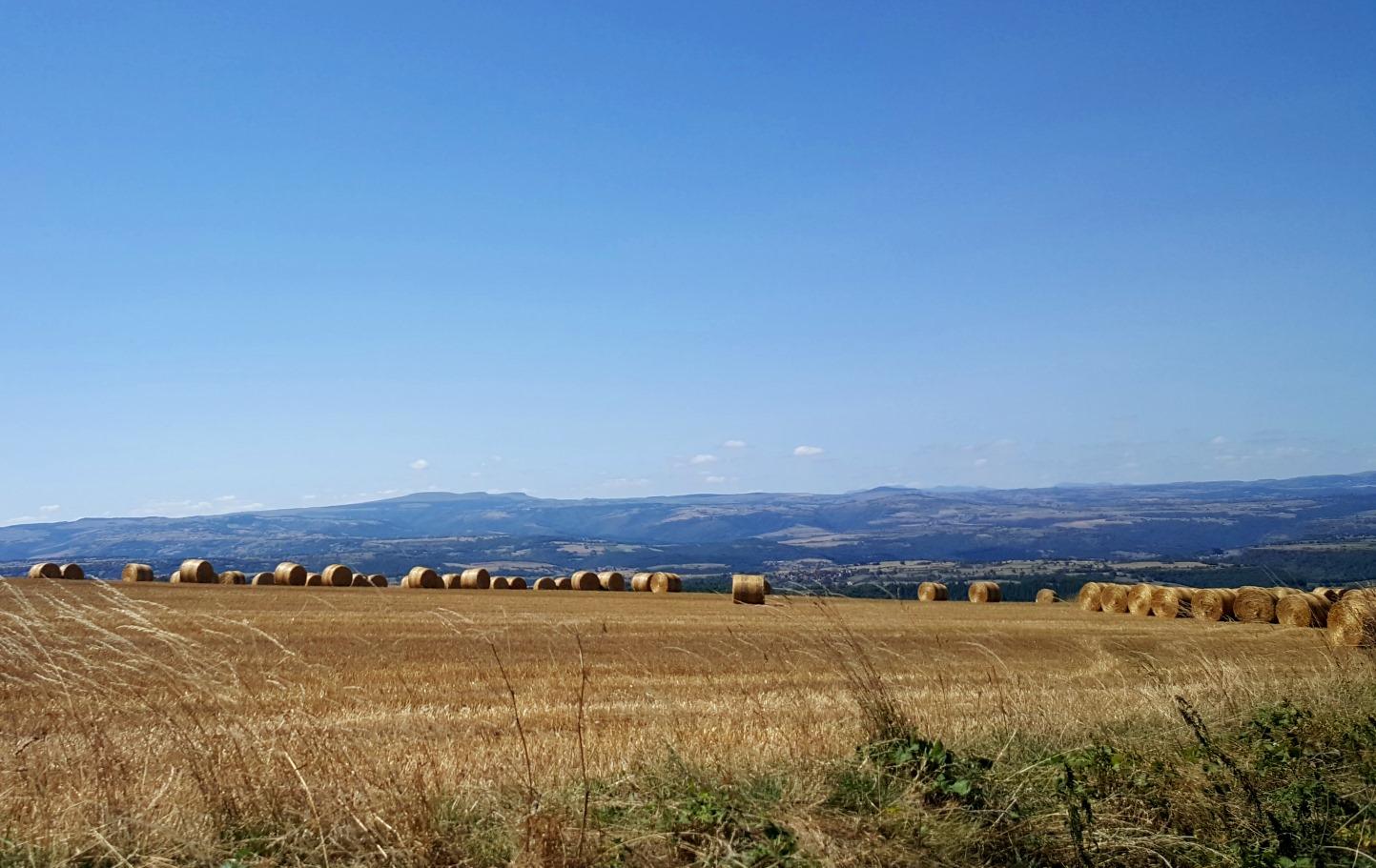 céréales en Auvergne - vente directe