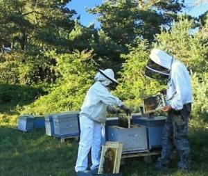 Natur'Ailes apiculteurs en Auvergne - miel de montagne