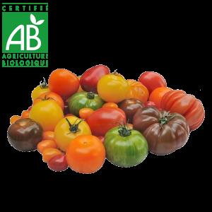 Tomates AB élevées en Agriculture biologique Auvergne