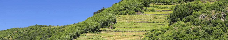 Magasin de producteurs de vin d'Auvergne en vente directe